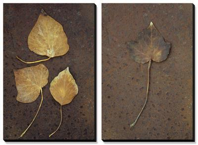Autumn or Winter Leaves of Ivy (Hedera Helix) on Rust