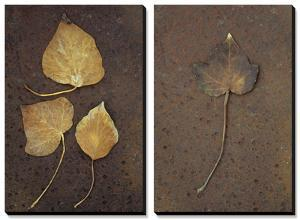 Autumn or Winter Leaves of Ivy (Hedera Helix) on Rust by Den Reader