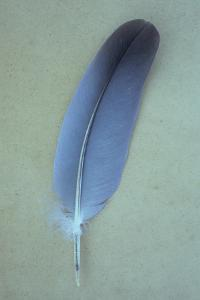 Blue Feather by Den Reader