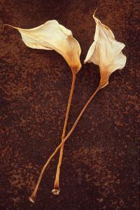 Calla Lily by Den Reader