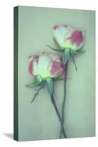 Dried Flower by Den Reader