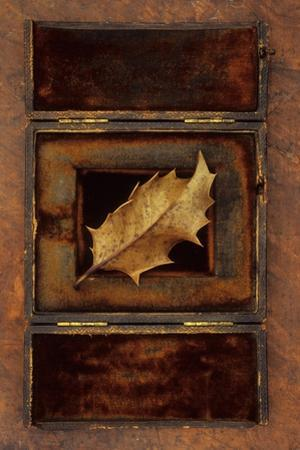 Dried Holly Leaf by Den Reader