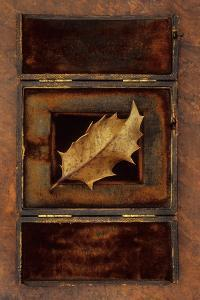 Dried Holly Leaf by Den Reader
