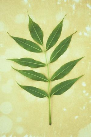 Green Leaves by Den Reader