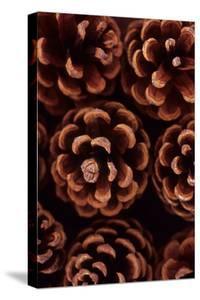 Pine Cones by Den Reader