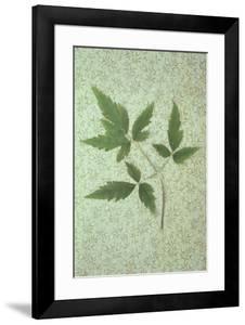 Plant Leaf by Den Reader