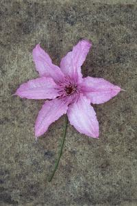 Purple Flower by Den Reader