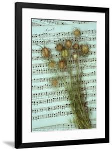 Seed Heads by Den Reader