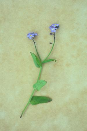 Single Flower by Den Reader