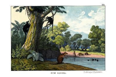 Dendrolagus and Hypsiprymnus, 1860--Giclee Print