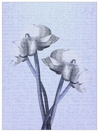 https://imgc.artprintimages.com/img/print/denim-floral-1_u-l-q1bch8u0.jpg?p=0