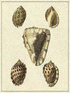 Crackled Antique Shells IV by Denis Diderot