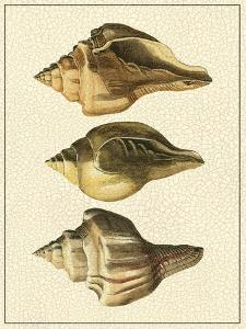 Crackled Antique Shells VI by Denis Diderot