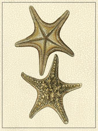Crackled Antique Shells VIII
