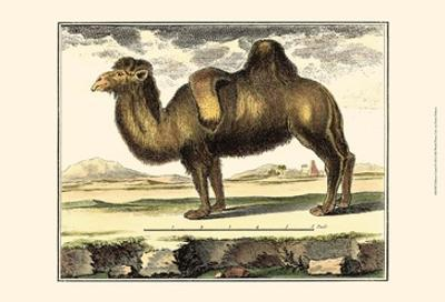 Diderot Camel by Denis Diderot
