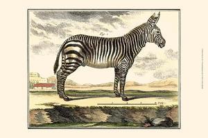 Diderot Zebra by Denis Diderot