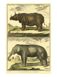 Elephant and Rhino by Denis Diderot