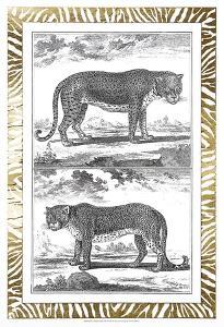 Gilded Safari III by Denis Diderot