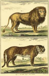 Lion and Tiger by Denis Diderot