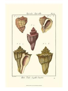 Pyrule Shells, Pl. 434 by Denis Diderot