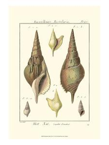 Rostellaire Shells, Pl. 411 by Denis Diderot
