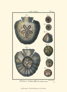 Sea Shells V by Denis Diderot