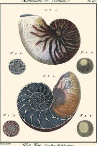 Sea Shells VI by Denis Diderot