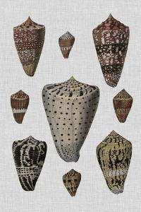 Shell Display I by Denis Diderot