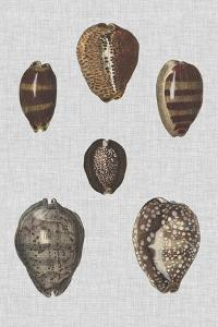 Shell Display IV by Denis Diderot
