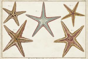 Starfish Naturelle I by Denis Diderot