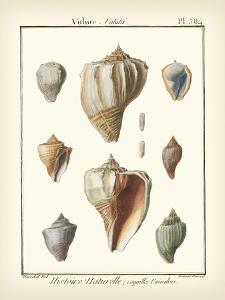Volute Shells, Pl.384 by Denis Diderot