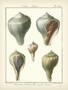 Volute Shells, Pl.390 by Denis Diderot