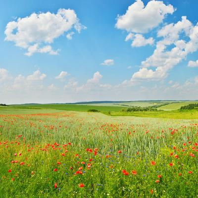 In Summer Countryside