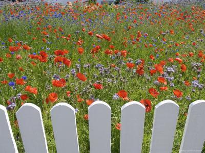 Denmark, Skagen, Garden of Red Poppies-Brimberg & Coulson-Photographic Print