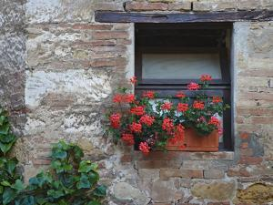 Flowers in a Window In a Tuscan Village, San Quirico d'Orcia, Italy by Dennis Flaherty