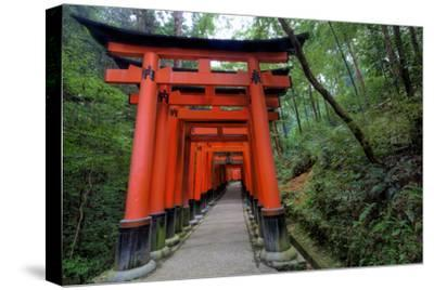 Japan, Kyoto. Torii Gates in the Fushimi-Inari-Taisha Shinto Shrine.