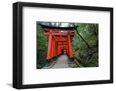 Japan, Kyoto. Torii Gates in the Fushimi-Inari-Taisha Shinto Shrine.