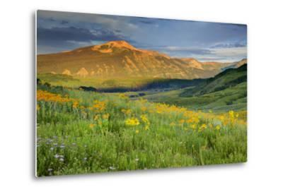 USA, Colorado, Crested Butte. Landscape of wildflowers and mountain.