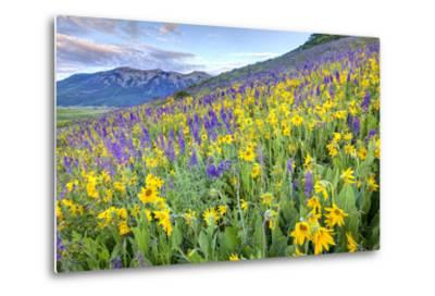 USA, Colorado, Crested Butte. Landscape of wildflowers on hillside.