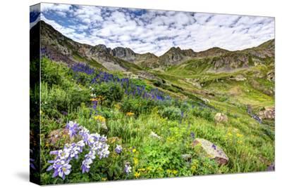 USA, Colorado. Wildflowers in American Basin in the San Juan Mountains