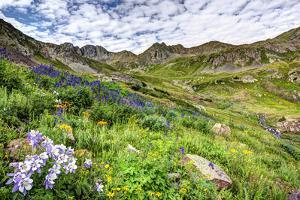USA, Colorado. Wildflowers in American Basin in the San Juan Mountains by Dennis Flaherty