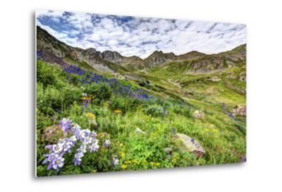USA, Colorado. Wildflowers in American Basin in the San Juan Mountains