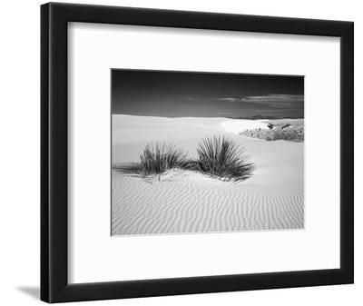 USA, New Mexico, White Sands National Monument. Bush in Desert Sand