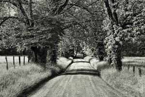 USA, Tennessee, Great Smoky Mountains NP. Dirt Road in Cades Cove by Dennis Flaherty