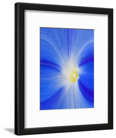 USA, Washington State, Palouse. Close-up of a Morning Glory Flower