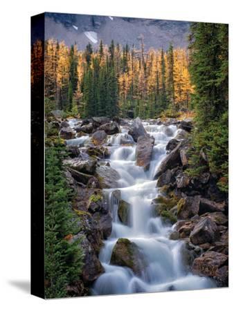Autumn Falls II