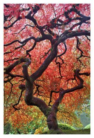 Autumn Patriarch