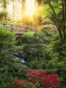 Awakening Garden II by Dennis Frates