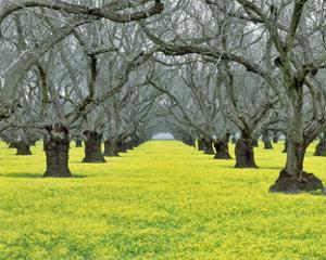 Orchard Carpet by Dennis Frates