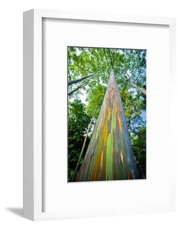 Painted Eucalyptus